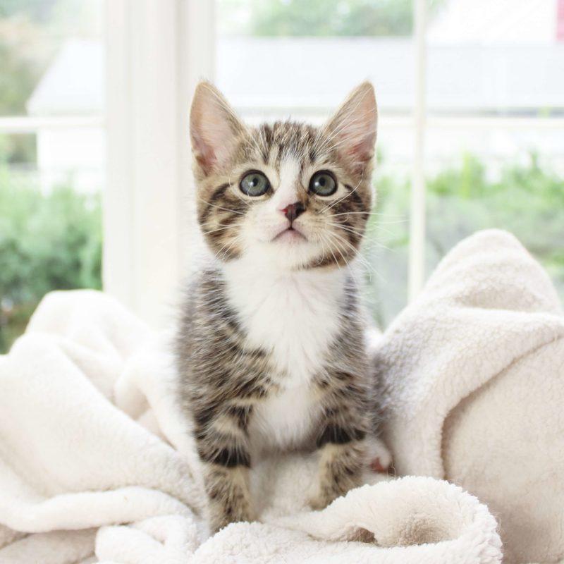 Catmia, Tierpsychologie, Katzentherapie, Katze